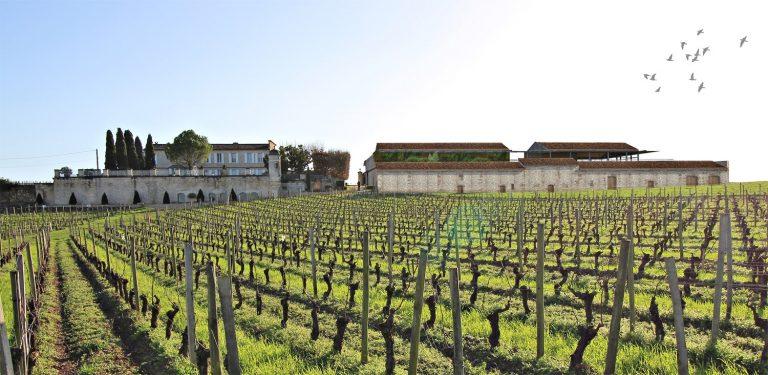 Projet N° 2 - Château Balestard la Tonnelle - Extension d'un chai viticole existant à Saint-Emilion